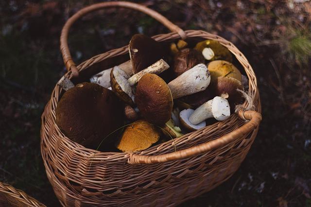 košík s houbami