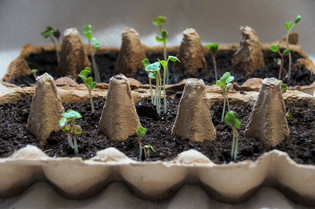 rostlinky v platu od vajec